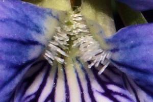 DSC00082 close up