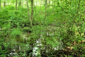 Floodplain Swamp